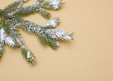 Closeup tree branch covered with snow on a beige background Royalty Free Stock Image