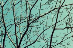 Closeup Tree branches without leaf in spring against blue sky background. Royalty Free Stock Photo