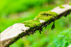 Closeup tree covered with green moss. Outdoor. Stock Image