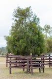 Tree in garden decorated Stock Photos