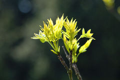 Closeup of a Tree Growing Royalty Free Stock Image