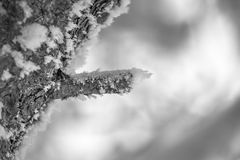 Closeup of a tree limb, bough, covered with frost and snow with a blurry background. Black and white Royalty Free Stock Photography
