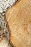 Closeup of Tree Rings on a Log Royalty Free Stock Image