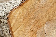 Closeup of Tree Rings on a Log Royalty Free Stock Photo