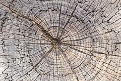 Closeup of Tree Rings and Texture Stock Images