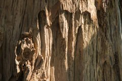 Closeup of tree surface Stock Photography