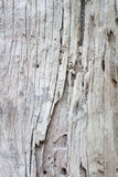 Closeup of tree texture background Royalty Free Stock Photography