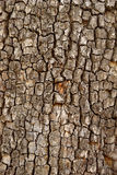 Closeup of tree trunk Stock Photo