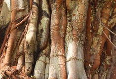 Closeup of tree trunk Stock Photography