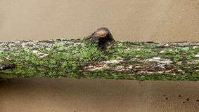 Closeup of a tree trunk covered with moss and lichen Royalty Free Stock Photos