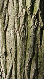 Closeup of tree trunk crust Royalty Free Stock Photography