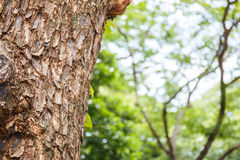 Closeup of tree trunk details with green bokeh background Stock Image