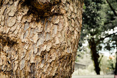 Closeup of tree trunk details with green bokeh background Stock Photography