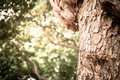 Closeup of tree trunk details with green bokeh background Royalty Free Stock Photography