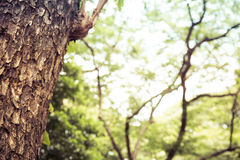 Closeup of tree trunk details with green bokeh background Royalty Free Stock Image