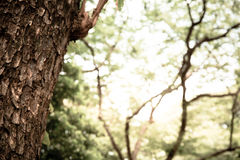 Closeup of tree trunk details with green bokeh background Stock Photos