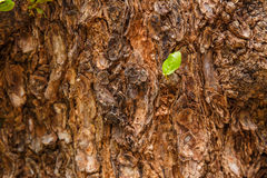 Closeup of tree trunk details with green leaf background Stock Photo