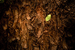 Closeup of tree trunk details with green leaf background Royalty Free Stock Image