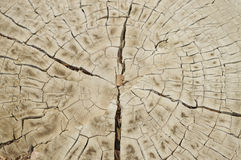 Closeup of tree trunk stump nature background Royalty Free Stock Photography