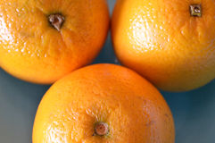 Closeup of a triad of oranges. 3 Valencia oranges, extreme closeup Royalty Free Stock Images