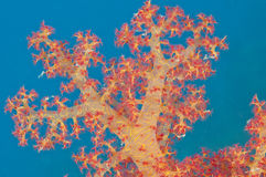 Closeup of tropical soft coral Stock Photos