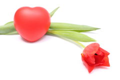 Closeup of tulip with red heart on white background Royalty Free Stock Photos