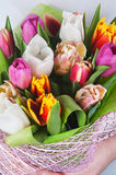 Closeup of tulips Stock Images