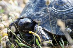 Closeup of turtle stock photography