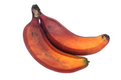 Red Caribe Bananas. Red ripe Caribe Bananas isloated on white royalty free stock photos