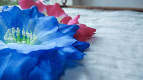 Closeup two red and blue Artificial cotton flowers Stock Images