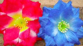 Closeup two red and blue Artificial cotton flowers Stock Photos
