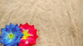Closeup two red and blue Artificial cotton flowers Royalty Free Stock Image