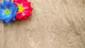 Closeup two red and blue Artificial cotton flowers Royalty Free Stock Images