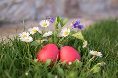 Close up of two red Easter eggs among flowers Royalty Free Stock Photography