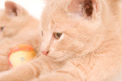 Closeup of two yellow kittens Stock Photo