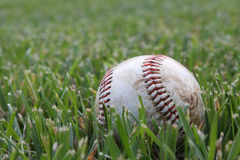 Closeup of used baseball on the grass Royalty Free Stock Image