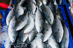 Closeup variety of fresh fish seafood on ice in market Stock Photo