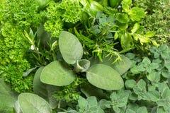 Closeup of variety fresh herbs Royalty Free Stock Photos