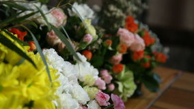 Closeup of various colorful flowers. Camera motion from blurred to focused video stock footage