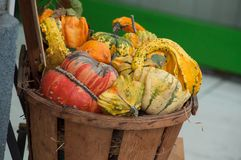 Various pumpkins in wooden basket in the street. Closeup of various pumpkins in wooden basket in the street stock image