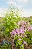 Closeup of various sorts of flowering wildflowers Royalty Free Stock Photos