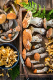 Various wild mushrooms straight from the forest Stock Photography