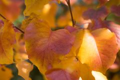 Closeup Colorful Autumn Leaves on Sunny Day stock photos