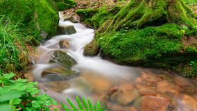 Closeup video of a forest brook. Pan slider footage of a forest brook, the clear water gently flowing through moss covered forest ground
