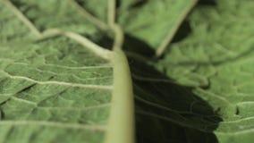 Macro footage of green leaf