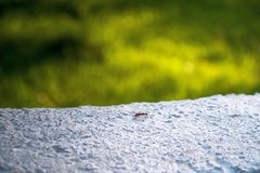 Closeup view of an anthill. royalty free stock photos