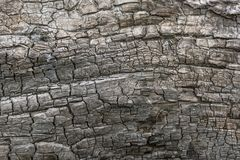 Closeup view of the background of a charred tree on a sunny day royalty free stock photo