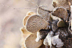Closeup view on cactus with textured surface Royalty Free Stock Photography