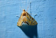 Insect kite. A closeup view of a colorful kite insect on a wall Stock Image