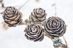 Closeup view of cones on snowy background Royalty Free Stock Photos